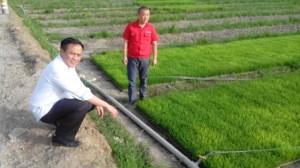 blusukan agricultural chengdu