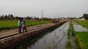 chengdu farm