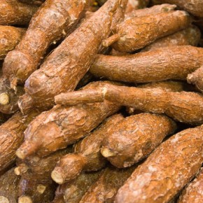 singkong cassava